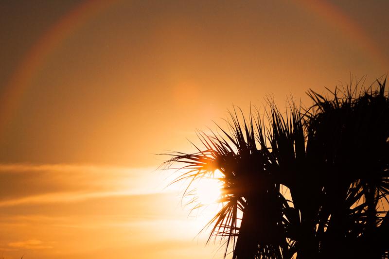 La sombra de una palmera