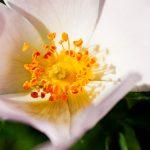 El Secreto de la flor