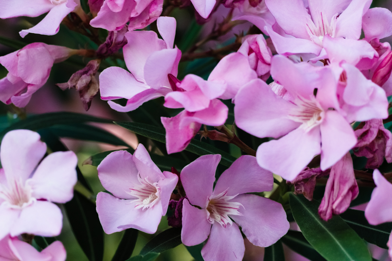 miles de flores