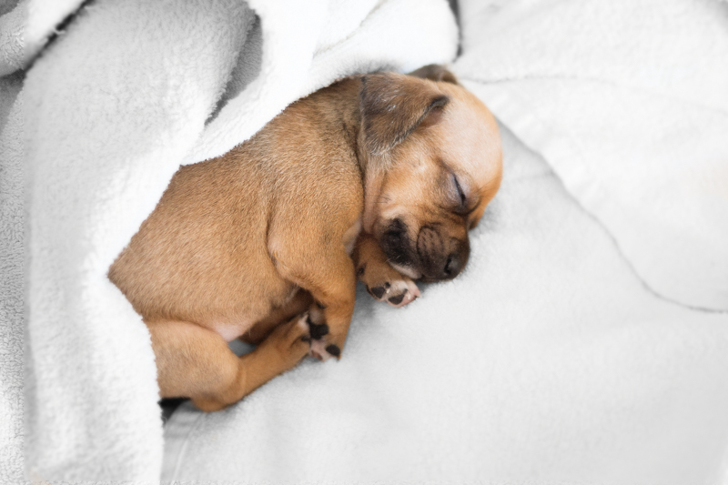 Un angel duerme