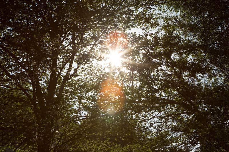 La luz de la mañana